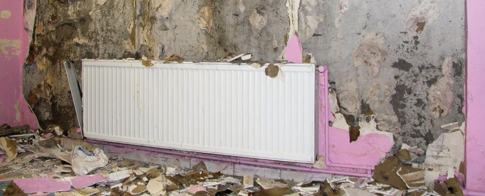 mold-remediation_op